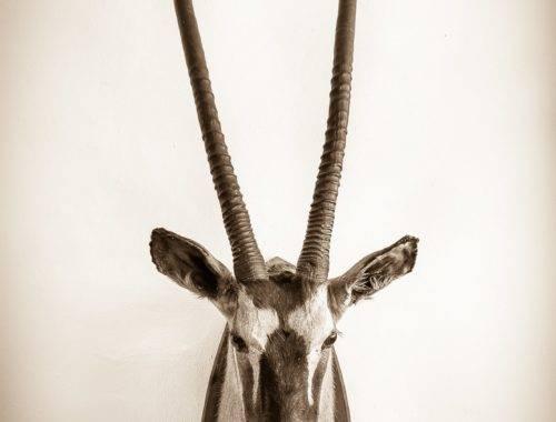 Oryx Las Palmeras del Califa
