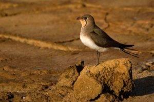 Avistamiento de aves en Vejer de la Frontera (Cádiz)